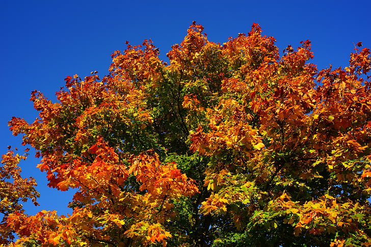 tree, late summer, autumn, leaves, nature, landscape