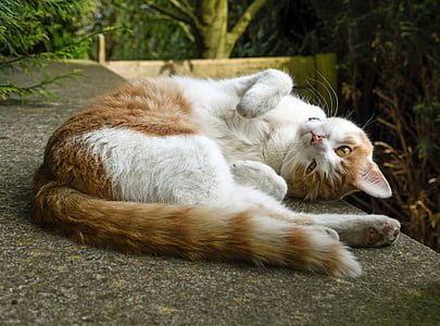 orange tabby cat lying down on concrete surface