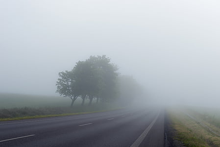 asphalt road beside trees covered with fogs during foggy time