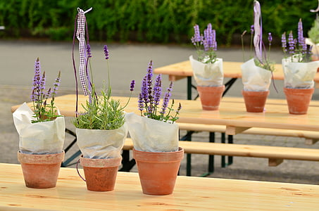 several purple plants on wooden tables
