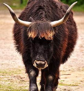 selective focus photograph of ox