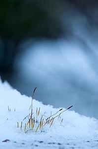 macro photo of snow