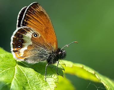selective macro photography of brown, gray, and white butterfly perched on green leaf