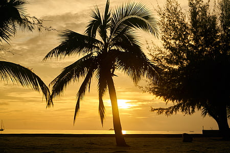 silhouette of coconut tree near body of water during sunset