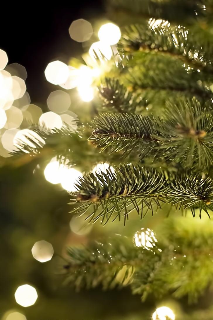 closeup photography of green Christmas tree