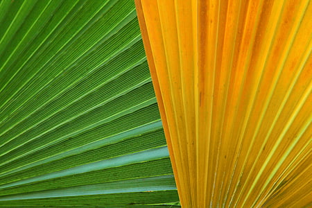 abstract, background, close-up, color, detail, flora