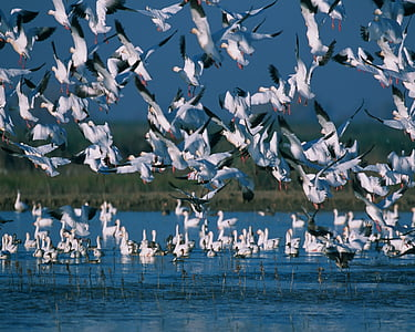 flock of white birds on body of water