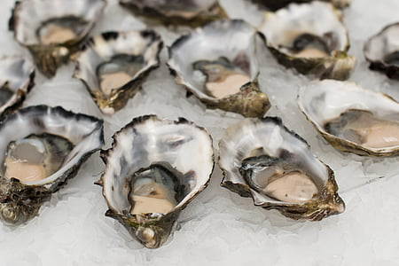 raw oysters with ice