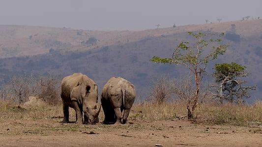two grey elephants near tree
