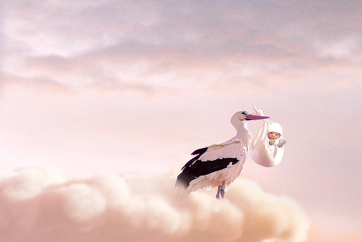 white and black stork holding baby