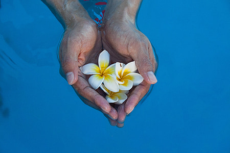 person holding white petaled flowers