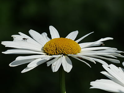selective focus photography of white daisy
