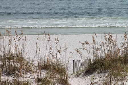 photo of brown grass near seashore
