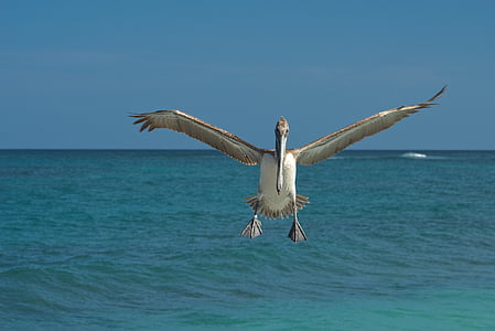 brown and beige bird near blue ocean