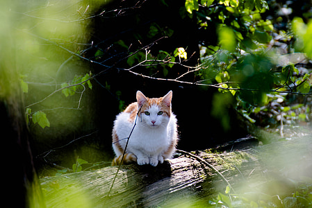 orange tabby cat on wood log