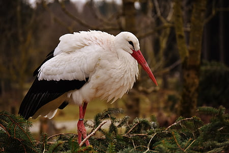 white and black long-beak bird