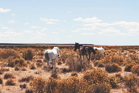 white horse on desert during daytime