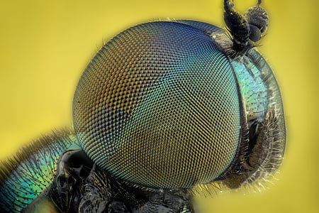 macro photography of insect eye