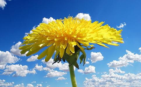 yellow petaled flower in bloom