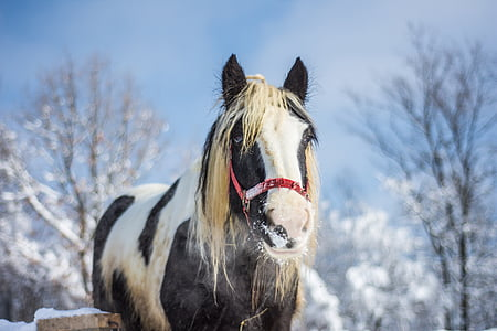 shallow focus photography of black and white horse