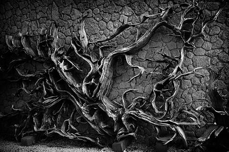 grayscale photo of vines on wall