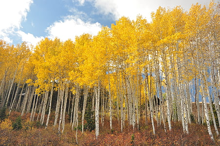 yellow maple trees under white sky during daytime