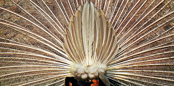brown feather decor