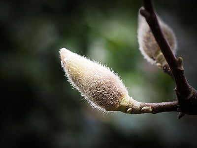 depth of field photography of flower bud