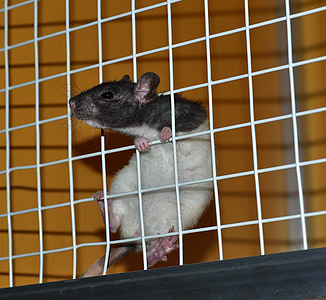 black and white mouse hanging on white steel pet cage