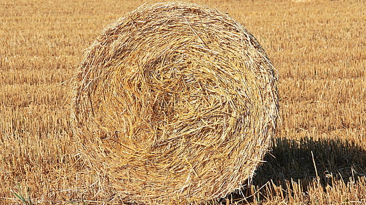 photo of brown hay during daytime