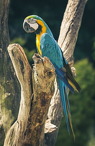 blue and gold macaw on brown tree