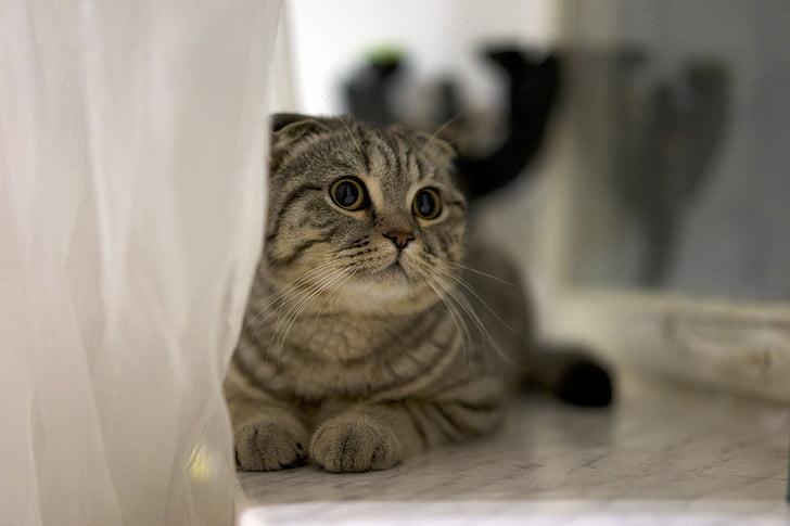 gray tabby cat lying on gray floor