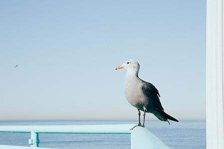 white bird on blue hand rail