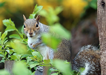 brown squirrel on green plant