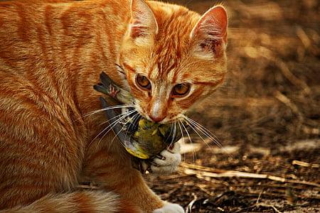 closeup photo of orange tabby cat eating bird