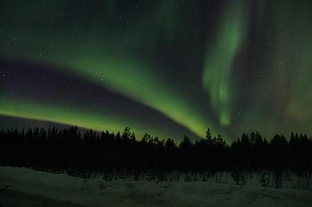 photo of trees above aurora