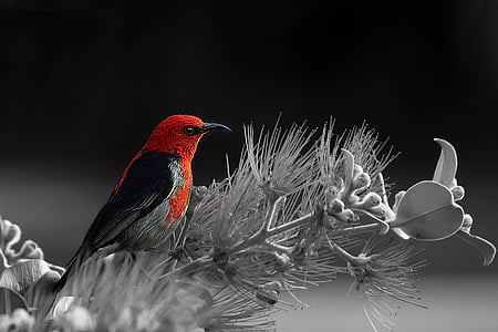 selective color photography of bird on flowers