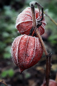 red and brown plant