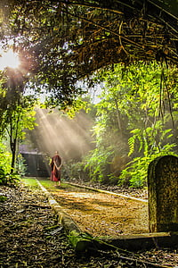 monk near forest