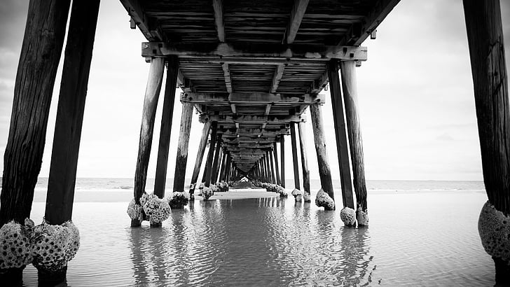 grayscale photo of wooden dock surrounded by body of water