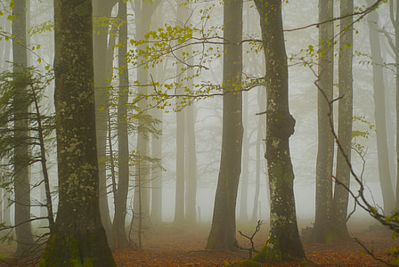 tree field covered with fogs