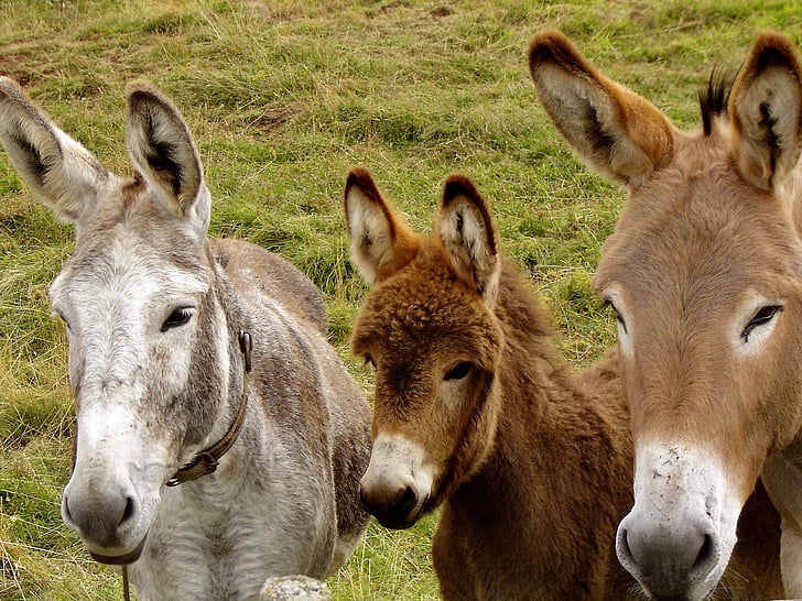 photo of three donkeys