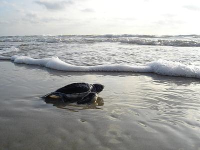sea turtle crawling through body of water