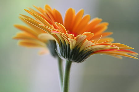 shallow focus photography of orange flower