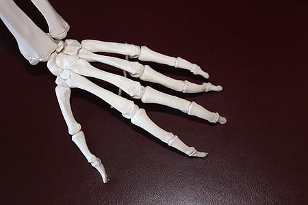 left skeleton hand on brown surface
