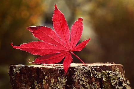 photo of red leaf top of tree trunk