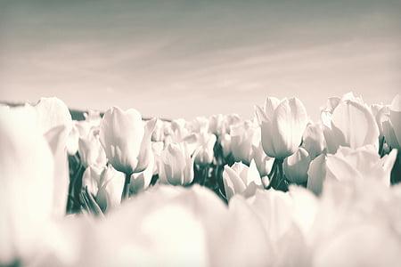 white flowers garden
