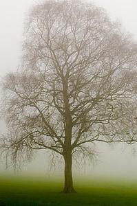 brown tree trunk painting