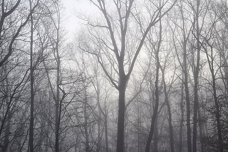 forest taken during winter day