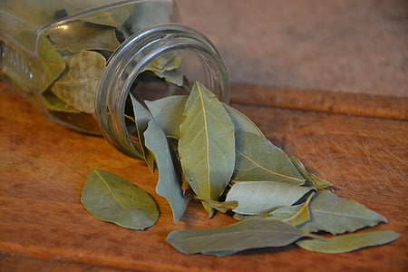 closeup photo of green ovate leaves from clear glass jar
